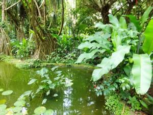 20 rainforest