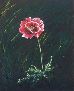 2016-11-11-poppy-8x10s